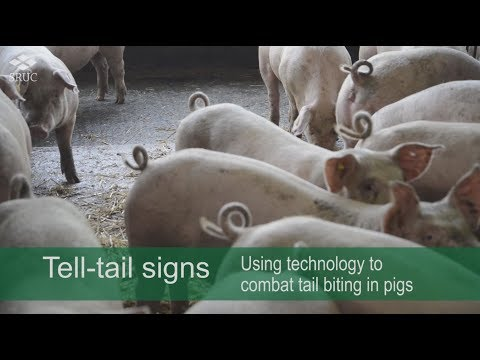 Tell-tail signs: 3D cameras alerting problem behaviours in pigs