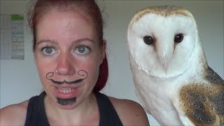 3 Facts you didn't know about Lookie (my barn owl)