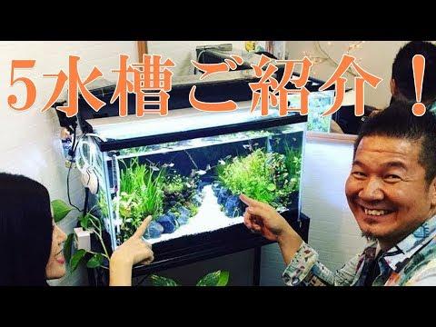 癒しの熱帯魚動画 初心者オーナーがハマっているサロンの5熱帯魚水槽紹介