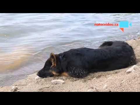 Přestávkově relaxační psí video