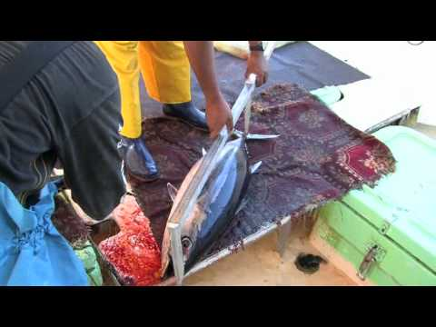 Hook, Line and Tuna