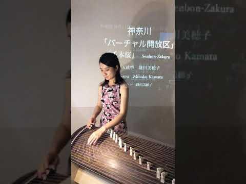 神奈川「バーチャル開放区」二十五絃箏 鎌田美穂子 「千本桜」の画像