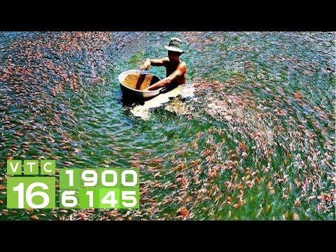 Kỷ niệm 60 năm Ngành Thủy sản có gì hot? I VTC16 - Thời lượng: 77 giây.