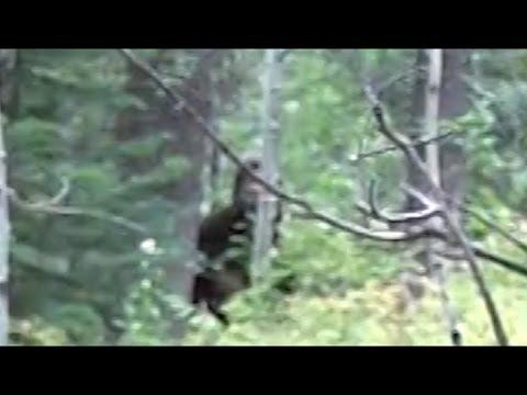 Bigfoot Sighting in Remote Idaho Wilderness
