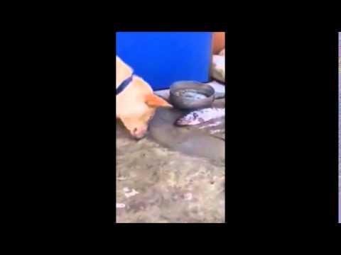 video toccante: il cane tenta di rianimare alcuni pesci fuor d'acqua