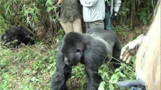 Crazy Gorilla Attack