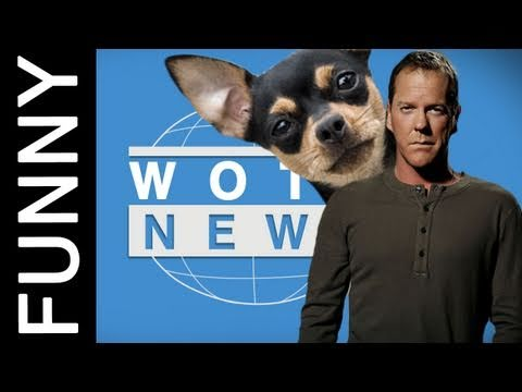 Chihuahua Foils Armed Robbery in WOTO NEWS