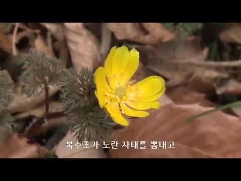 봄 소식 가득한 완도수목원
