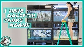 Setting Up My New Goldfish Tanks by Solid Gold Aquatics