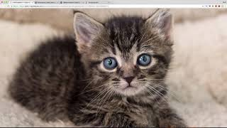 Kittens and cats! meowing, cats, cats meowing loudly, cats and kittens meowing, funny cats, kittens and cats meowing, funny cat ...