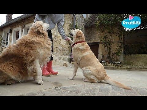 Comment apprendre à votre chien à donner la patte