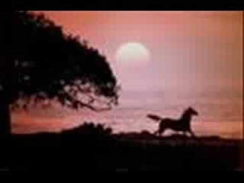#Sobre amores contra o vento