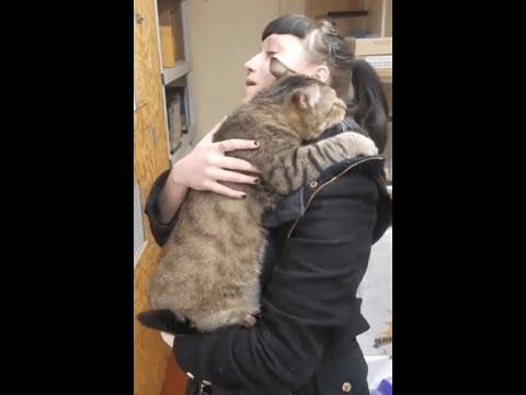 Этот огромный кот обнял посетительницу магазина и не захотел отпускать!
