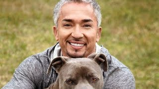 Video The Untold Truth Of The Dog Whisperer MP3, 3GP, MP4, WEBM, AVI, FLV Maret 2018