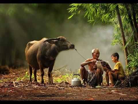 Potret Kehidupan Damai & Indahnya Kehidupan di Desa