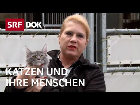 Die beliebtesten Haustiere der Schweiz - Katzen und i ...