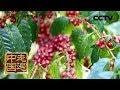 《走遍中国》系列片《大国基业——大通道》(3) 齐头并进 20180829 | CCTV中文国际