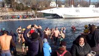 Stories of the Polar Plunge