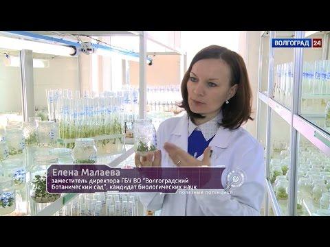 Биотехнологии. Выпуск от 02.03.2017