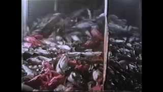 Kann man die Grösse einer Nation daran messen, wie sie die Tiere behandelt?