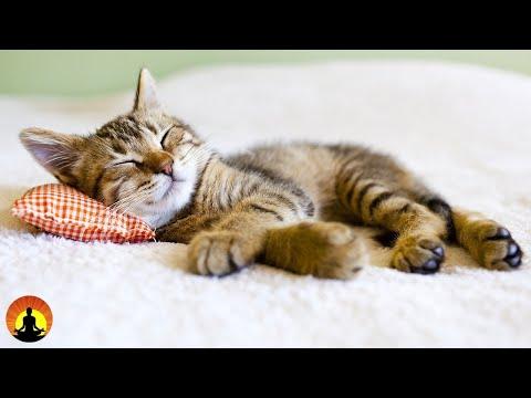 🔴 Relaxing Sleep Music 24/7, S …