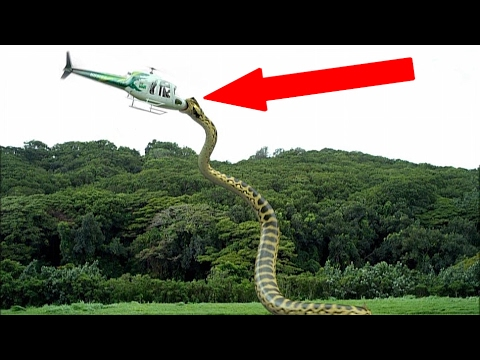 Most TERRIFYING Extinct Creatures Ever!