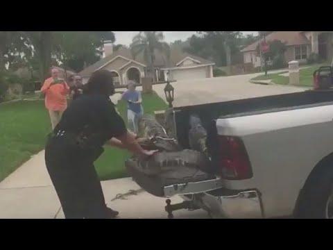 צפו: מה קרה כשתנין הועמס על רכב המשטרה והחליט לנקום בשוטרים