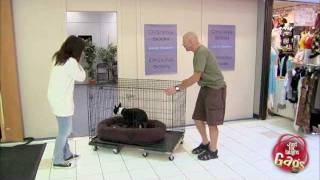 Cute Dog In Shrinking Door Prank