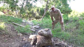 CRAZY KOMODO DRAGON ADVENTURE (Part 1) Prehistoric Pets Style by Prehistoric Pets TV