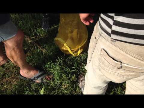 ვეშაპის გაშვება (ვიდეო)