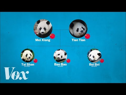 How China's Rent a Panda Program Works