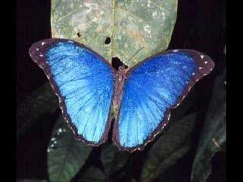 tranquilatus - Plants, animals and landscapes of rainforests from around the world set to Vangelis' Heaven & Hell part one. *If you are someone who objects to the use of th...