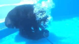 Купер — любитель подводного плавания