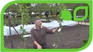 Obstbäume für den Küchengarten auf Schloss Ippenburg