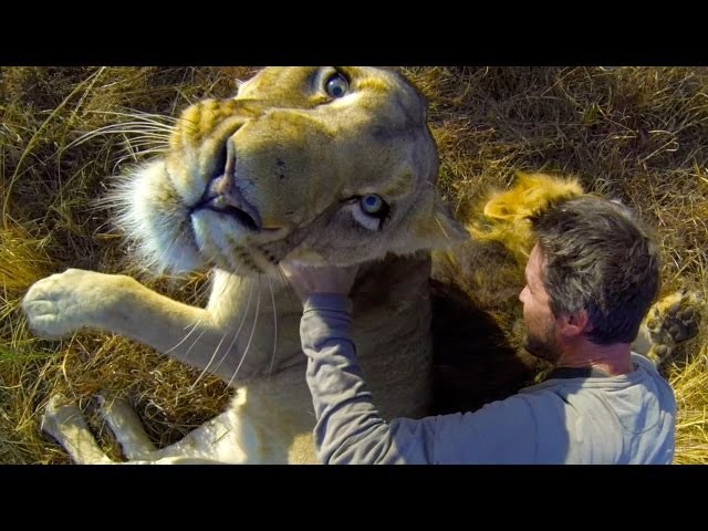 Dont be scared of the Lion Hug! Amazing