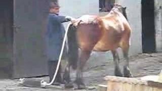 Dziwny sposób na czyszczenie konia