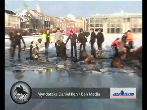 11 Horses falling through the ice