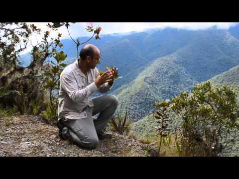 Oxford Impacts - Rainforest biodiversity