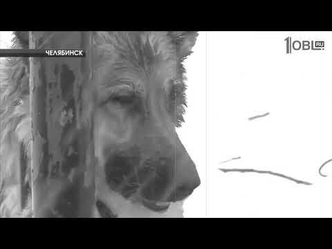 Глаза собаки (сл./муз. Яша Боярский)