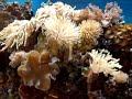 Meu Aquario marinho.