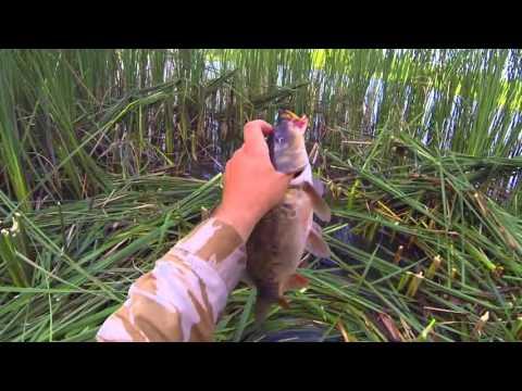 ловля коропа на кивок видео