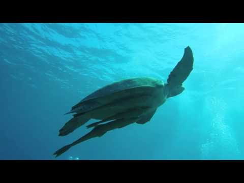 Diving with Doplhins and Turtles