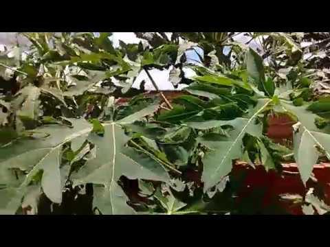 Plantação em espaço inutilizado em sua casa, dicas pra você