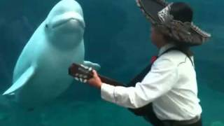 Who Would Guess That A Whale Would Like Mariachi Music?