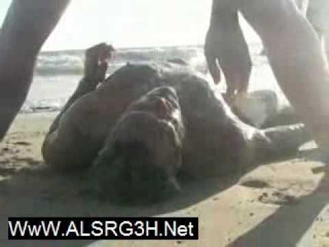 قنديل بحر ينقض على وجه رجل وشاهد طريقة الانقاذ