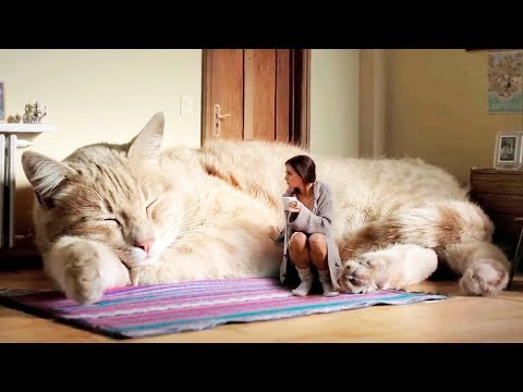 THE BIGGEST CATS In The World