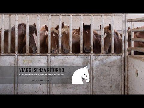 VIAGGI SENZA RITORNO - Cosa si nasconde dietro la carne di cavallo
