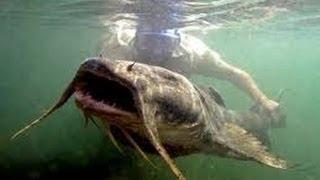 Aharks Feeding In Chao Phraya River Bangkok Thailand
