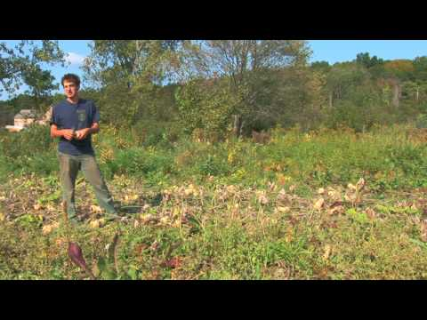 Vegetable Gardening : How to Harvest & Store Winter Squash