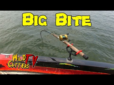 Ohio River Action:Fishing for Blue catfish around mussel beds